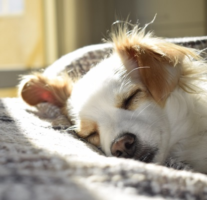 image of cute sleeping dog